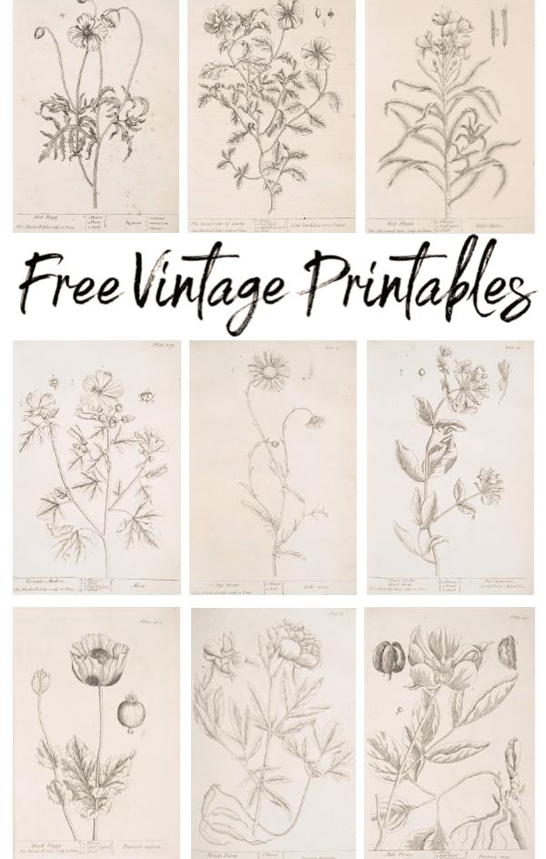 Botanical Vintage Printables