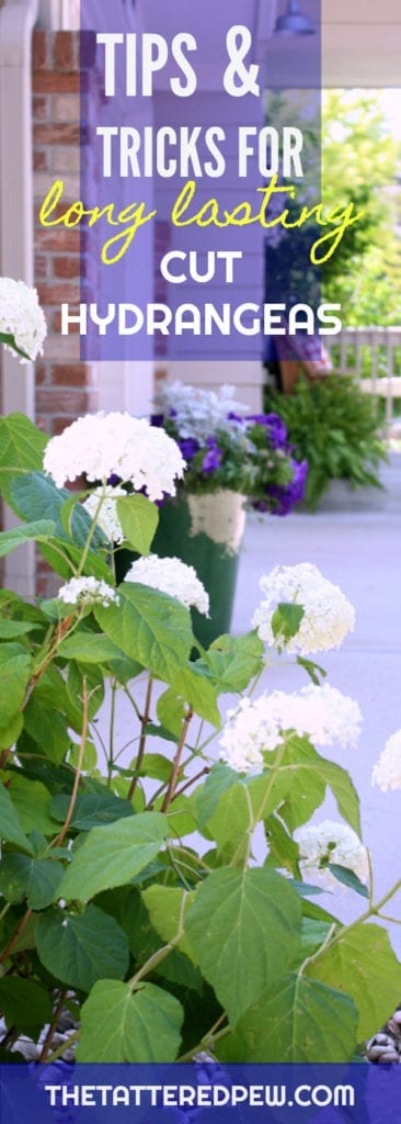 Tips and Tricks for Long Lasting Hydrangeas