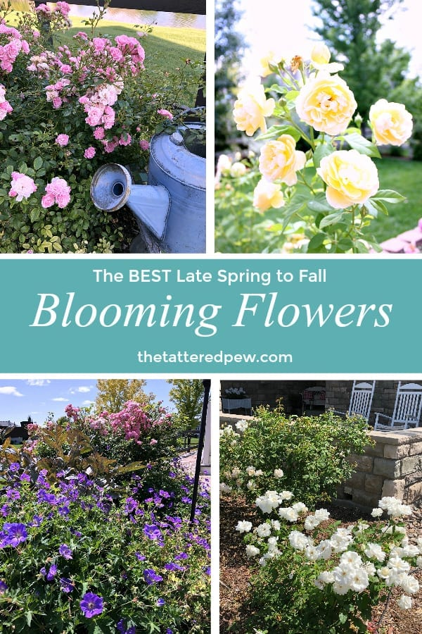 The Best Late Spring To Fall Blooming Flowers The Tattered Pew