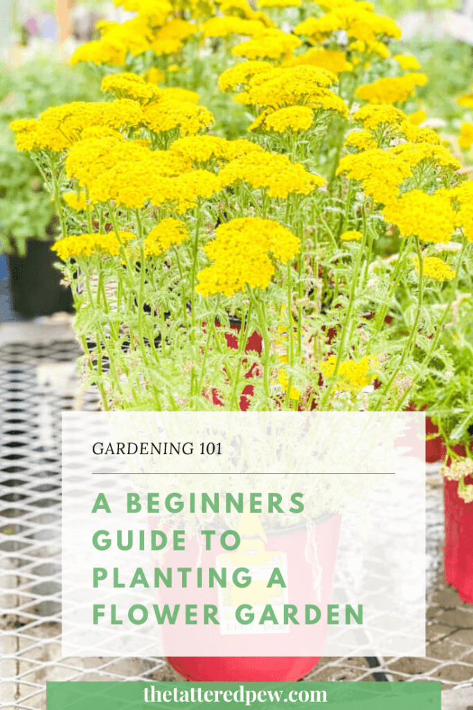 Gardening 101: This will answer your beginner gardening questions..a beginners guide to planting a flower garden!