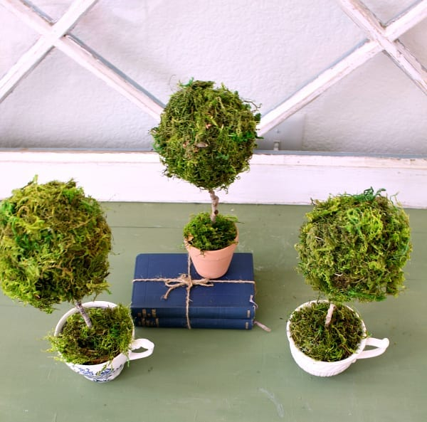Overhead view of a mini teacup topiary.