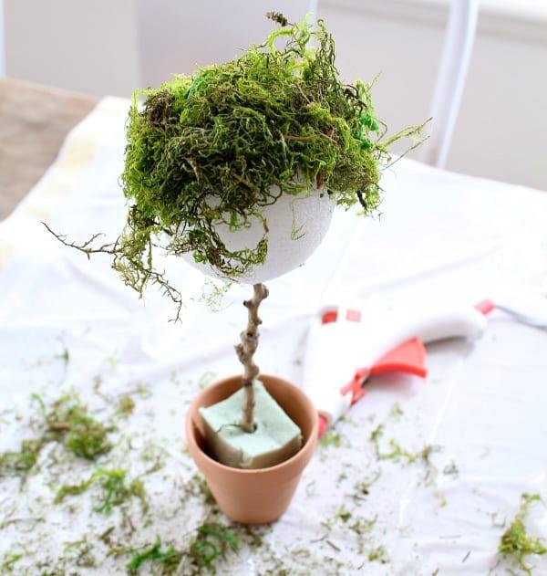 Mini topiary using moss.