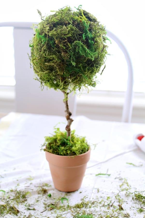How To Make a Mini Teacup Topiary