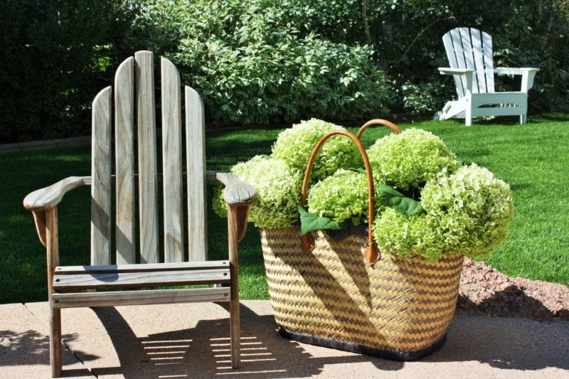 Tips and tricks fro drying hydrangeas the easy way.