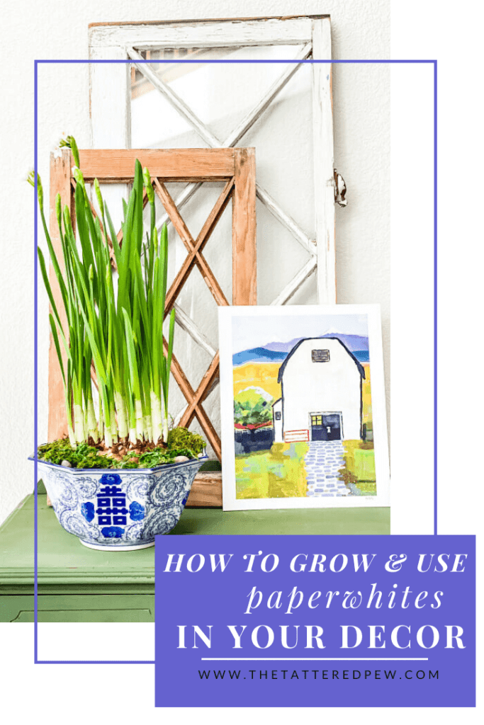 How to easily grow and use Paperwhites in your decor.