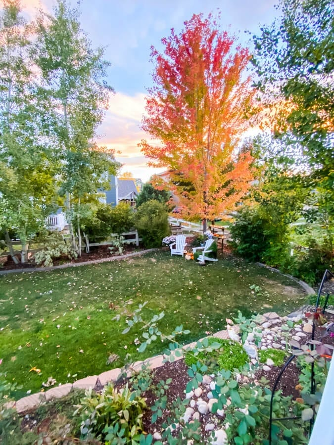 Join me for a Fall evening in the garden here in Colorado!