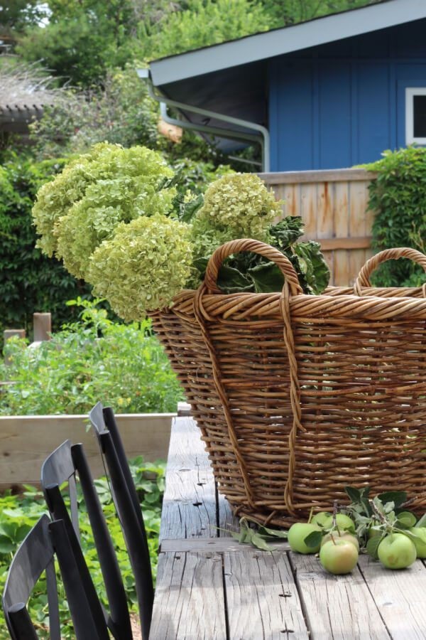 dried hydrangeas, apples and a vintage basket outdoors on a table.