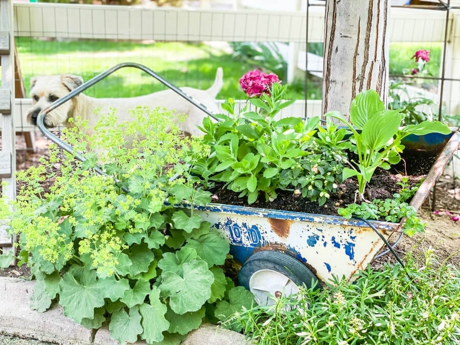 Why not add some alternative planters to your backyard for a fun and inexpensive way to landscape your yard. This is just one of many creative backyard landscaping ideas on a budget.