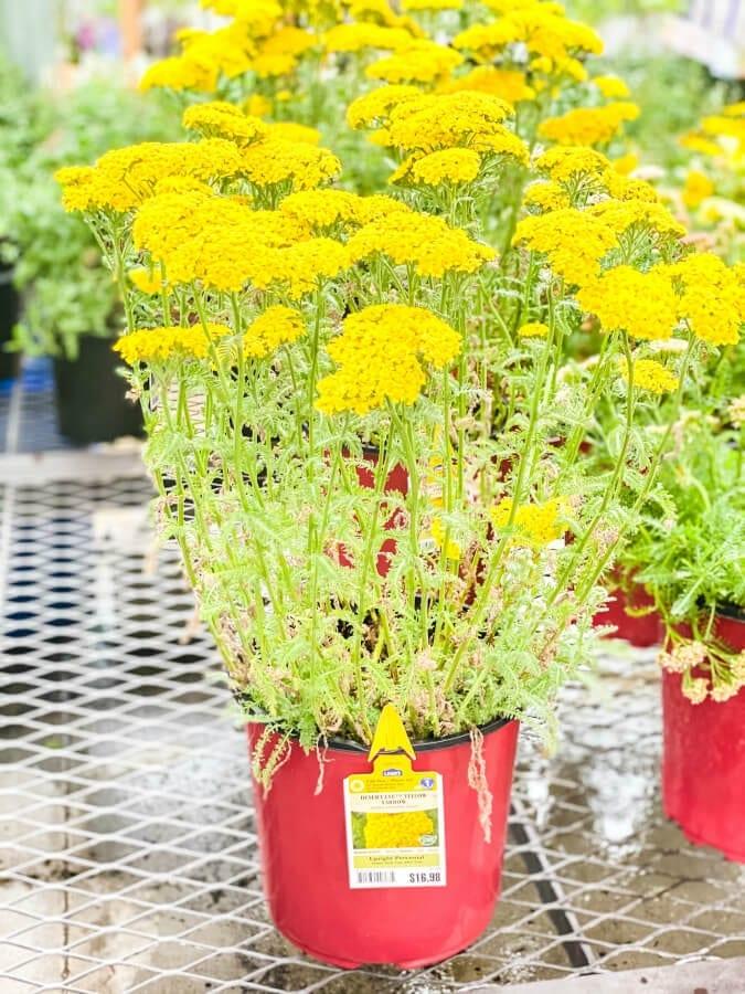 A Beginners Guide to Planting A Flower Garden