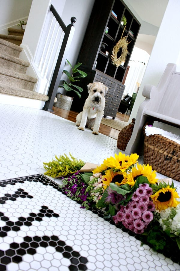 Even our dog loves our new tile!