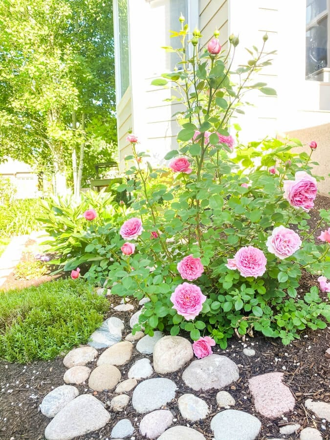 River rock beds are an inexpensive way to add interest to your garden or backyard spaces.