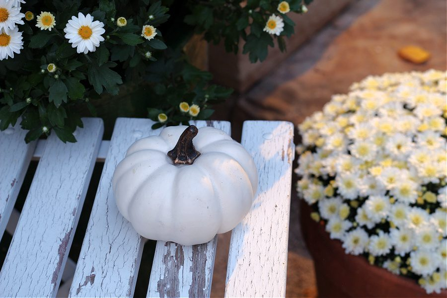 Mini white baby boo pumpkin and white mums for Fall on our front steps.