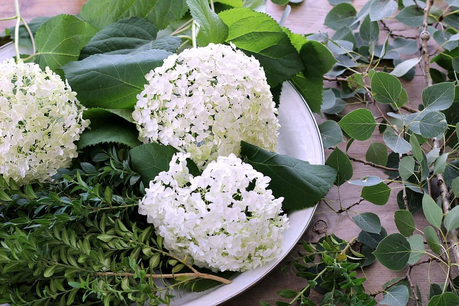 Boxwood clippings, aspen leaves and hydrangeas are the perfect paiting for a simple and low floral centerpiece.