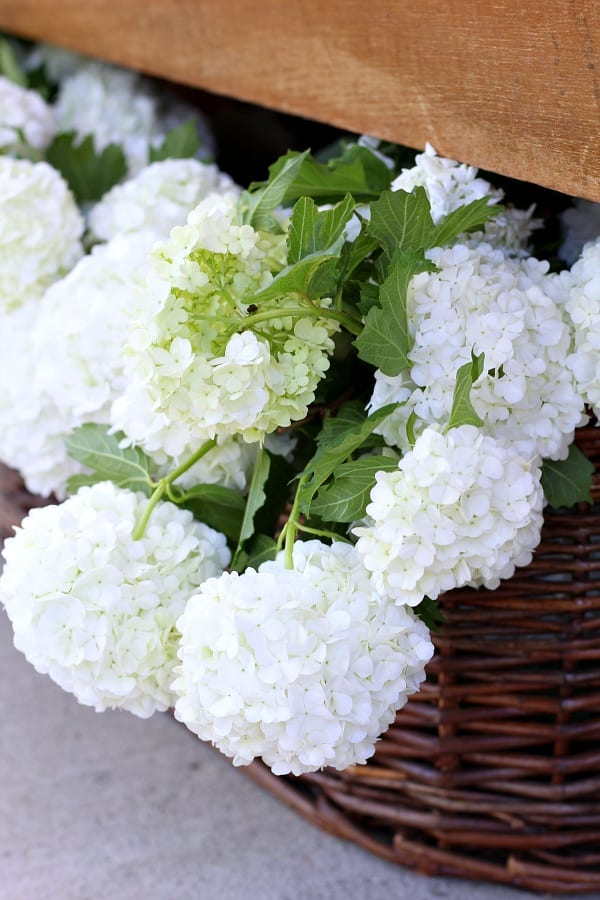 Viburnum snowballs are the signal that our porch is ready for summer!