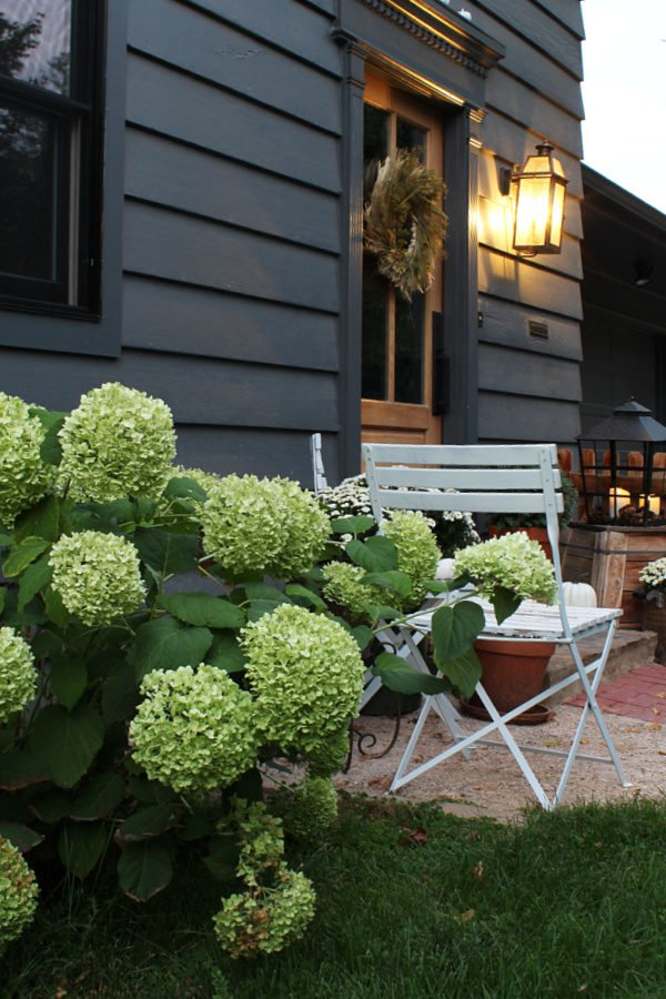 Our annablee hydrangeas add some great natural Fall decor!