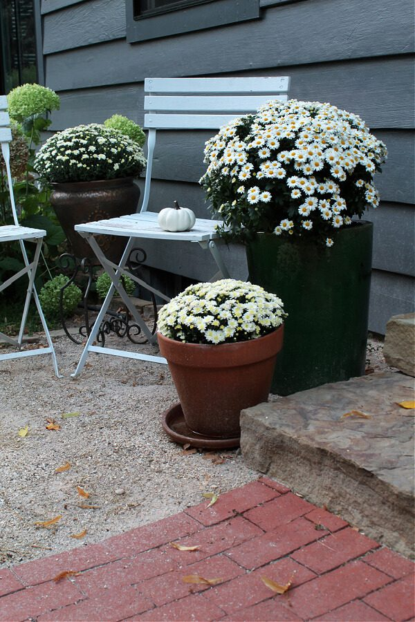 White mums, white pumpkins and white bistro chairs pop against our Peppercorn painted house.
