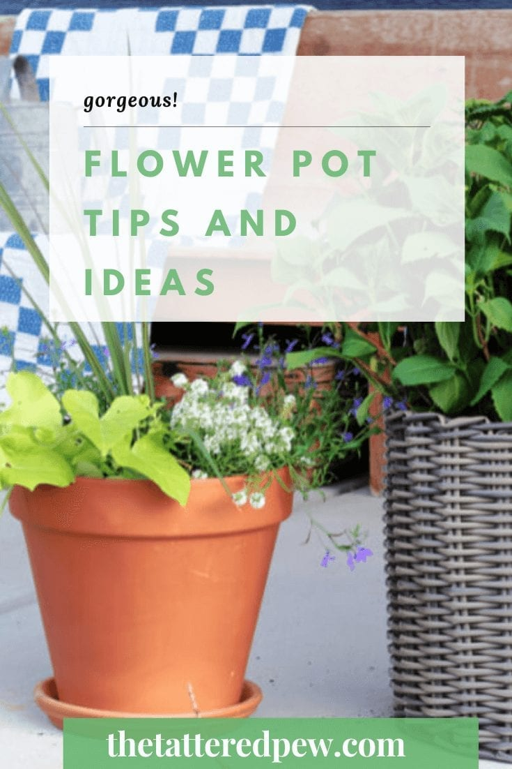 Need some flower pot inspiration? Check out these gorgeous tips and ideas!