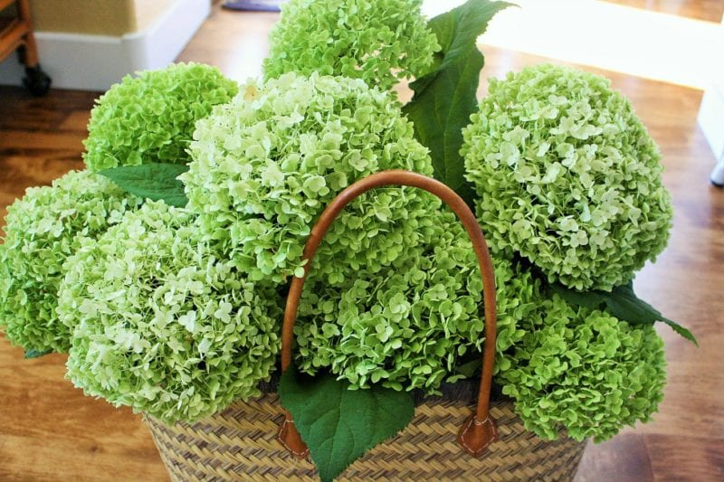 Tips on how to perfectly dry your hydrangeas!