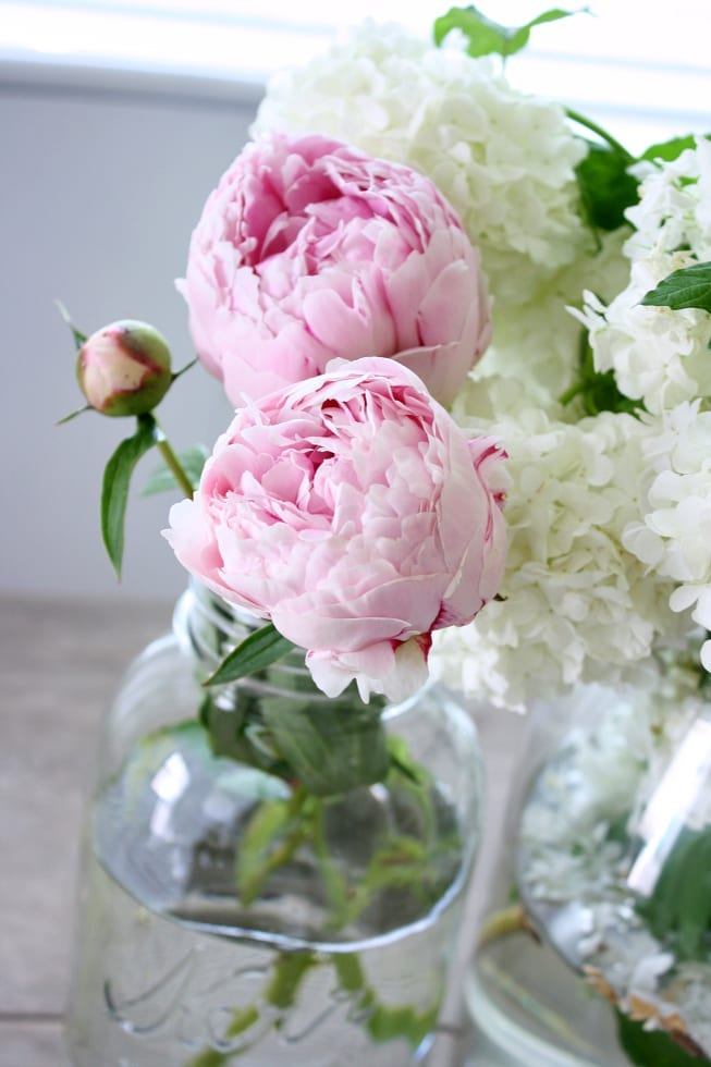 Tips and Tricks for the BEST peonies!