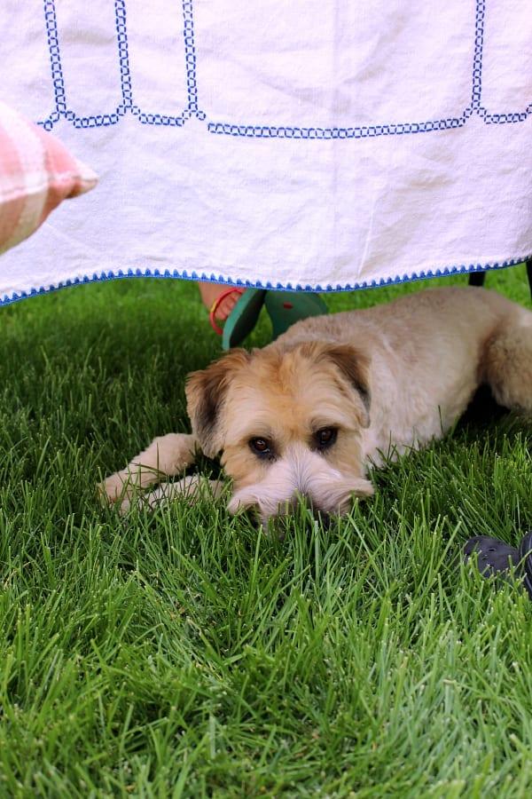 Kona our pup loves agood garden tea party too.
