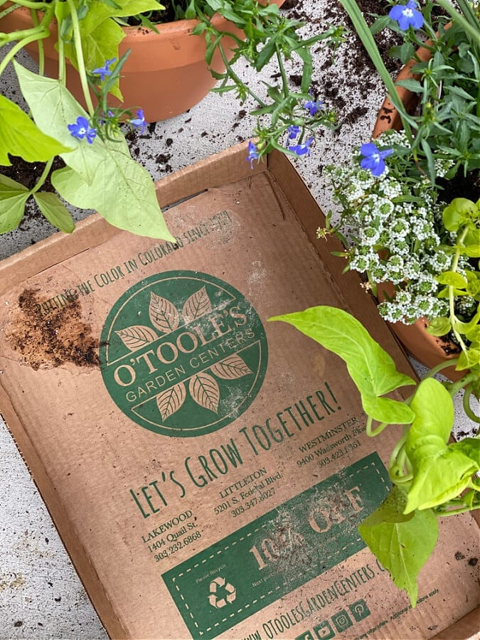Mother's Day plant shopping at O'Tooles Garden Center!
