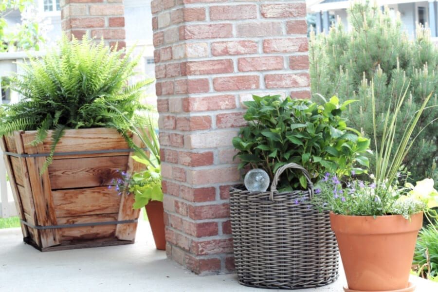 Tips and tricks for gorgeous potted plants for your porch!