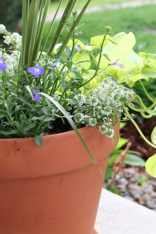 Potted flowers make every porch better!