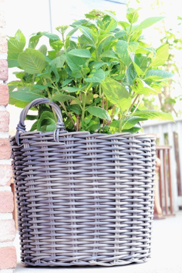 Outdoor baskets for plants? Yes please!