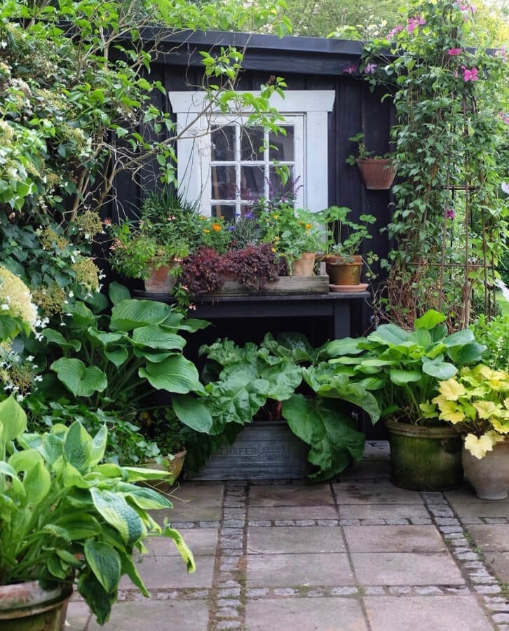 My inspiration for planting hostas in pots comes from photographer Mette Krull More