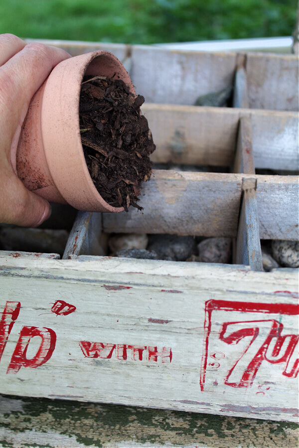 Adding dirt to our vintage soda crate in preparation for the flowers.