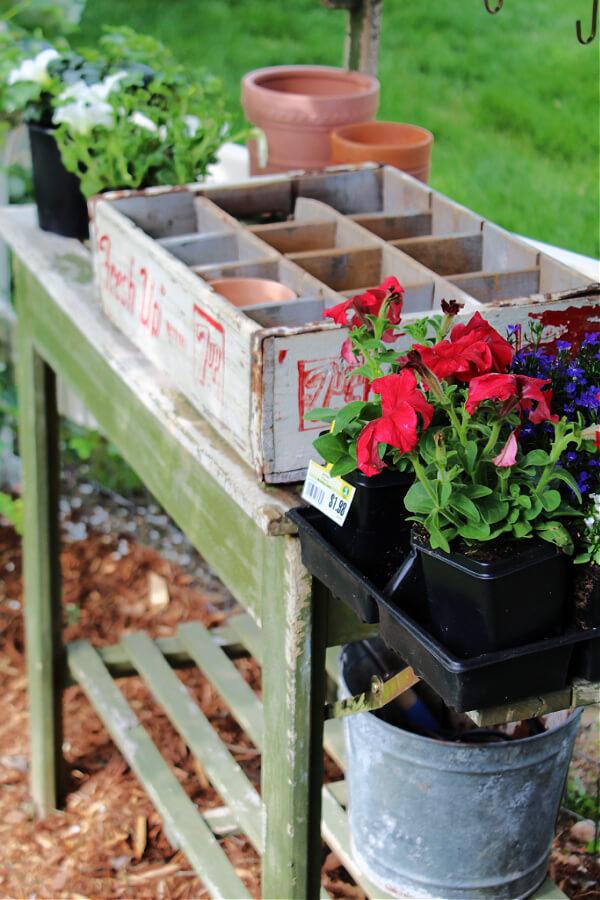 Preparing to repurpose a vintage soda into a patriotic planter!