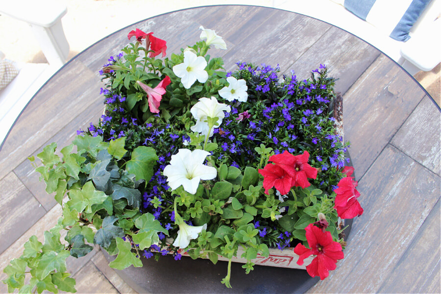red, white and blue flowers for summer