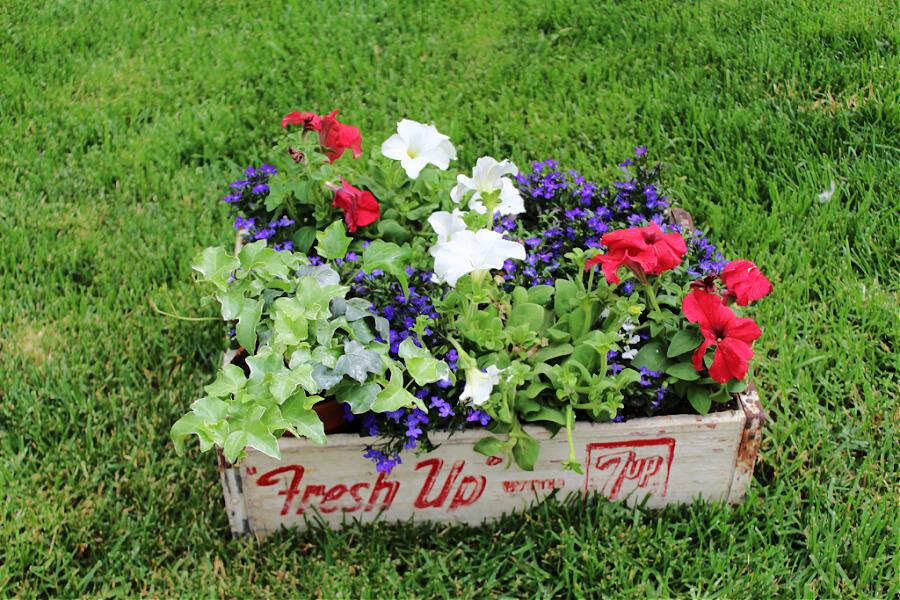 Vintage soda crate turned planter