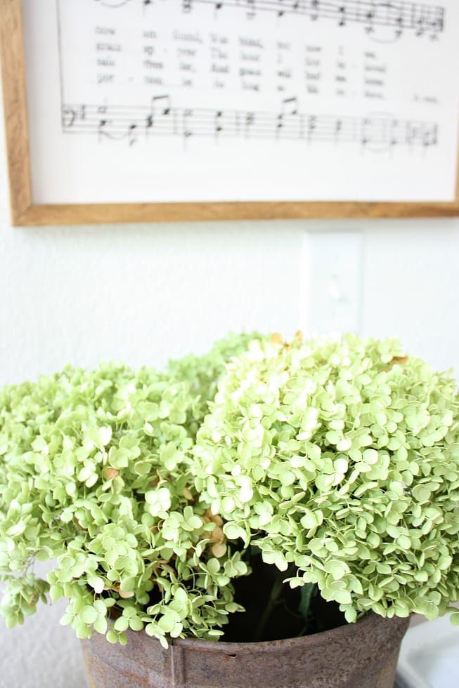 Simple tips for drying hydrangeas that anyone can do!