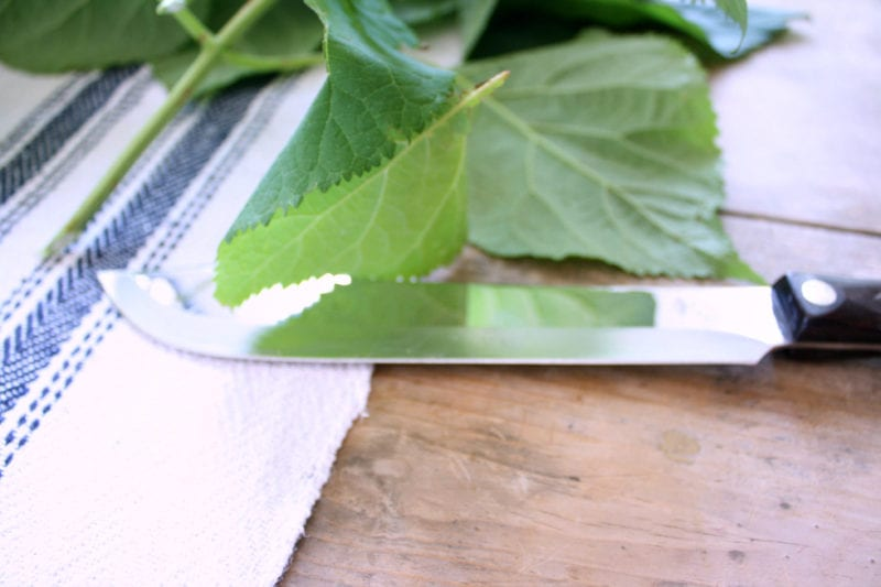 Non-serrated knife for cutting hydrangea stems