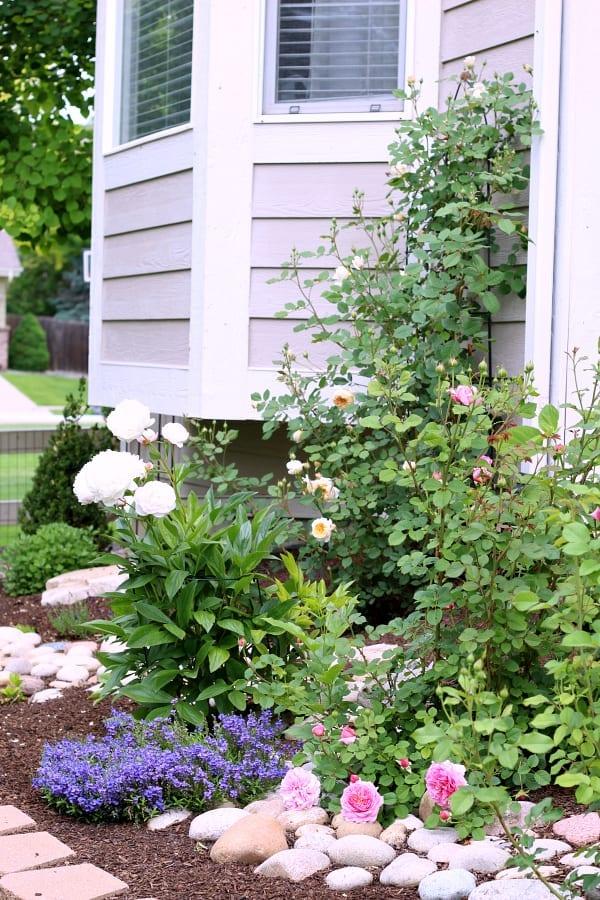 A garden full of sun loving perennials.
