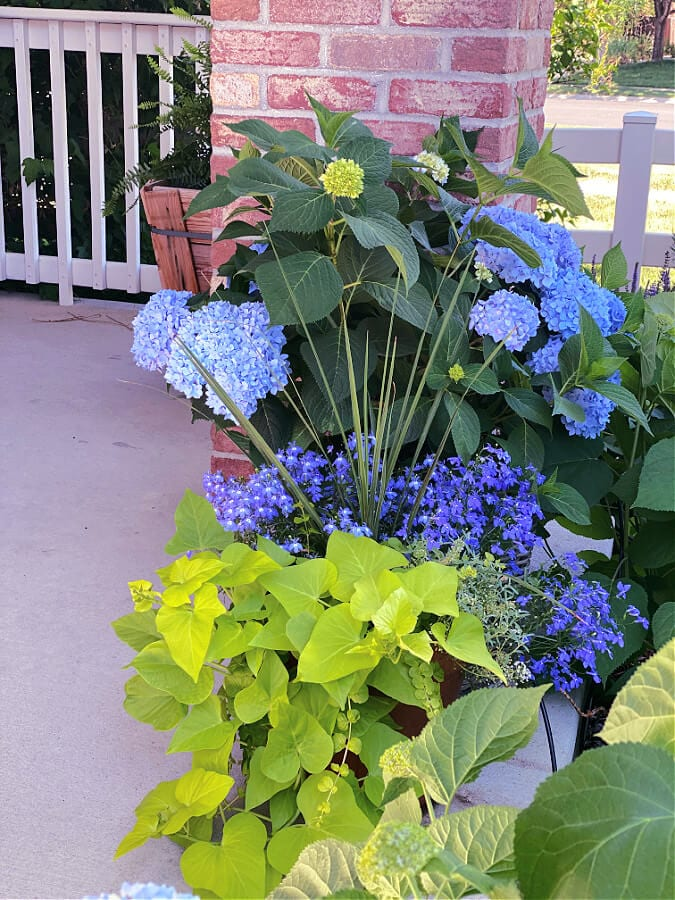 potted plants on our summer porch tour