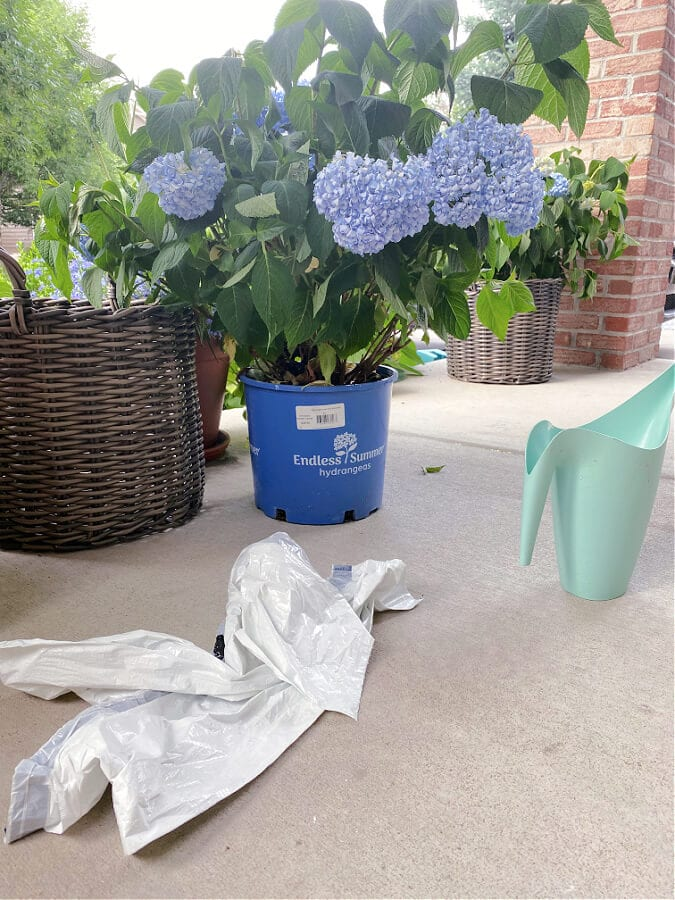 Try this hydrangea water hack!