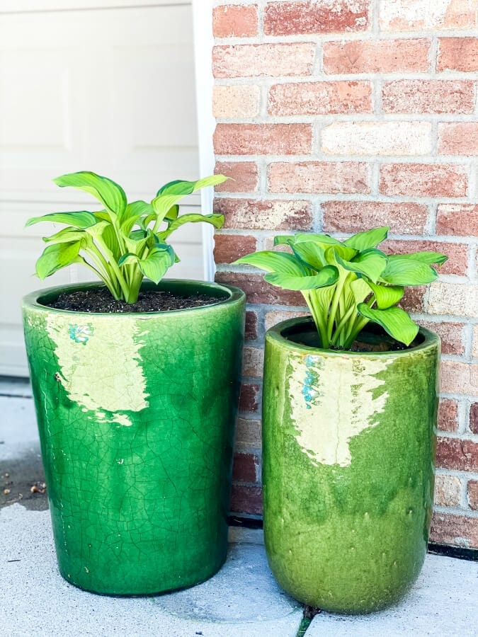 Hostas love shade and can thrive in pots!