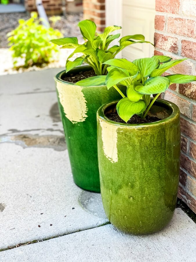 Potted hostas need to be winter in an unheated garage or shed.