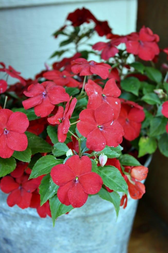 Red impatiens brighten up a porch instantly.