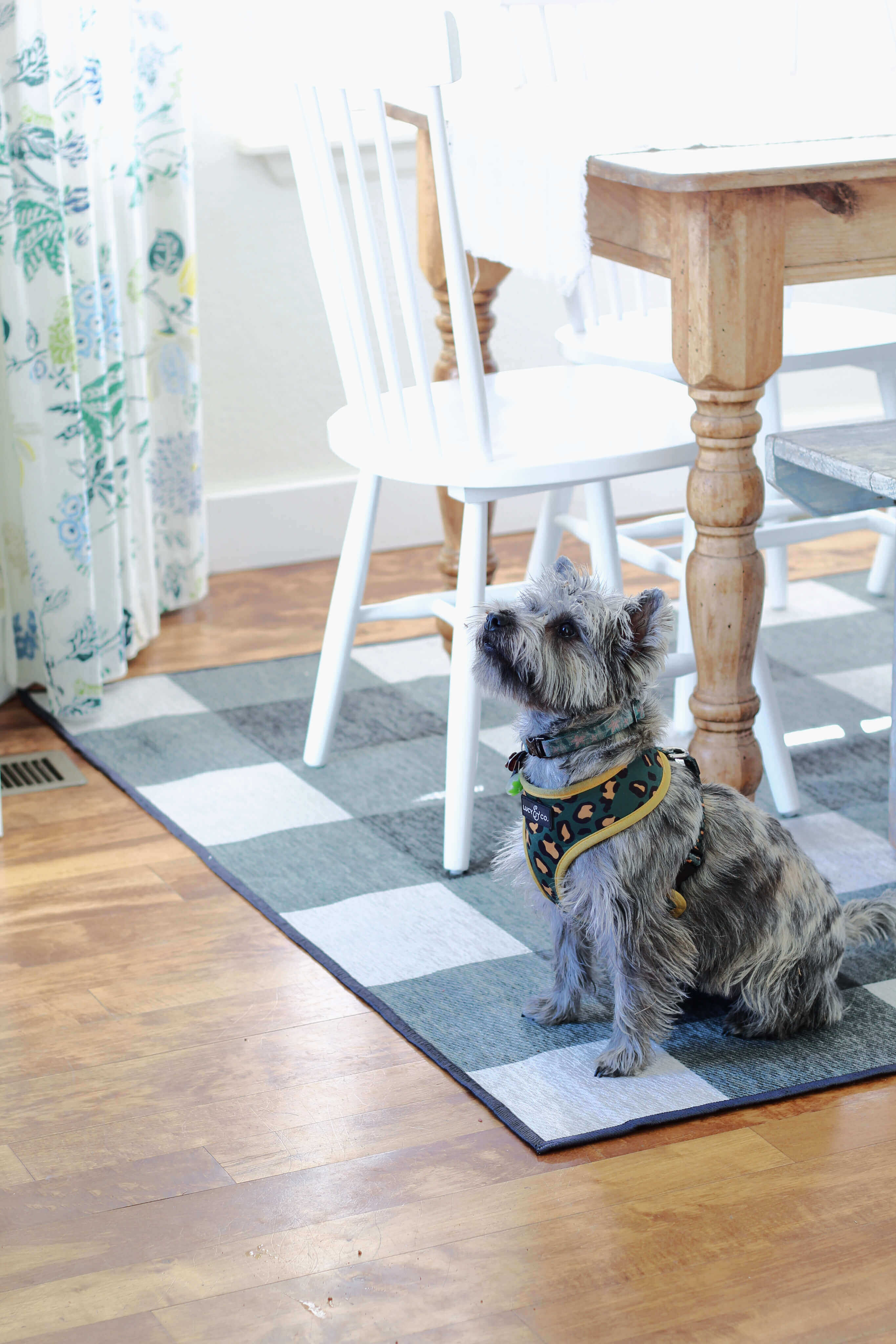 Our Ruggable is beautiful and practical for our kitchen. Dog and mom approved!