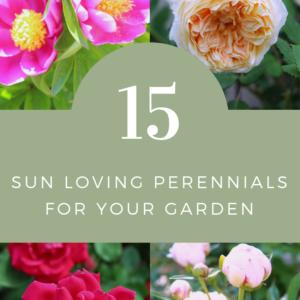 15 Sun loving perennials for your garden.