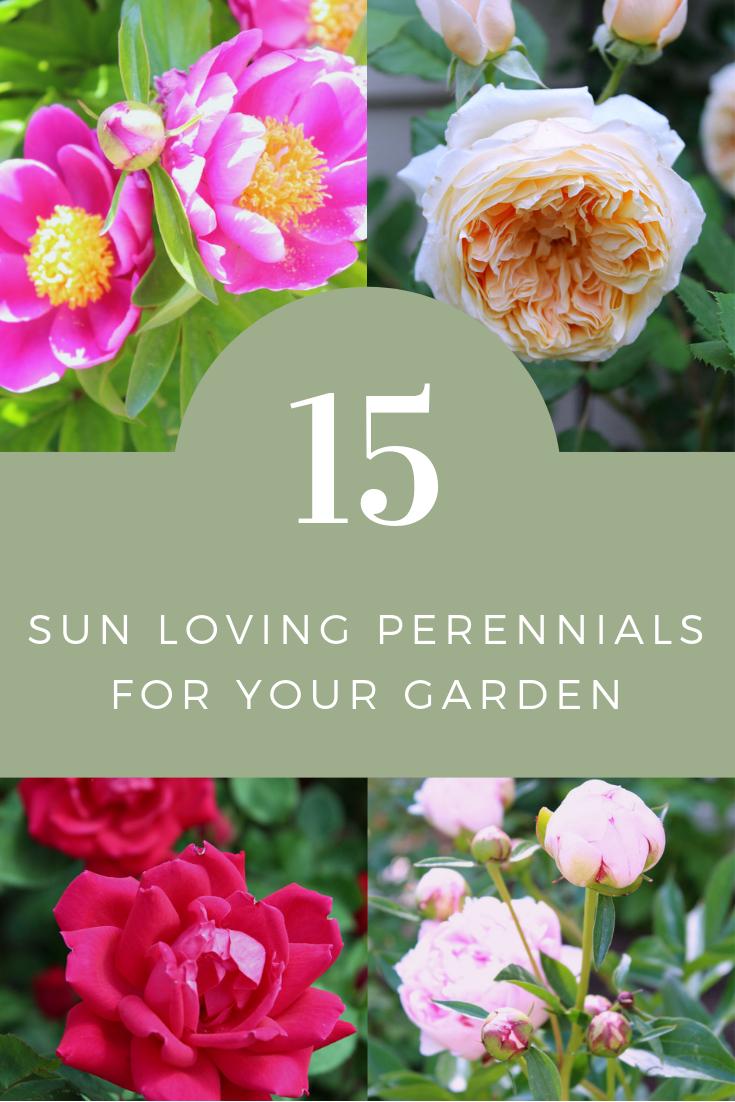 My Favorite Sun Loving Perennials