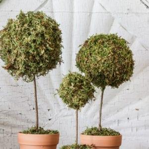 Mini moss ball topiary DIY.